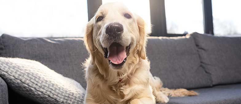 witzige Hunde auf Instagram