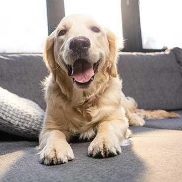 Die witzigsten Hunde auf Instagram