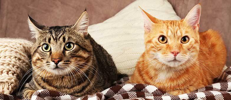 Katze oder Kater – was ist besser