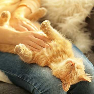 Katze ans Streicheln gewöhnen