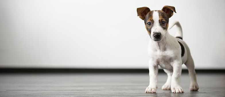Was bedeutet das Schwanzwedeln beim Hund?