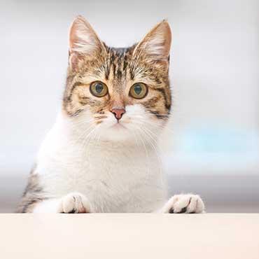 ailurophobie mein partner hat angst vor katzen tierisch. Black Bedroom Furniture Sets. Home Design Ideas