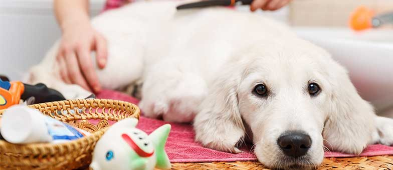 Fakten zum Fellwechsel beim Hund