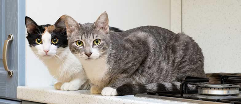 Katze von der Küchenzeile fernhalten