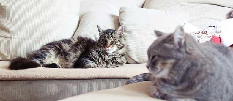 sinnloses Leben ohne Katze
