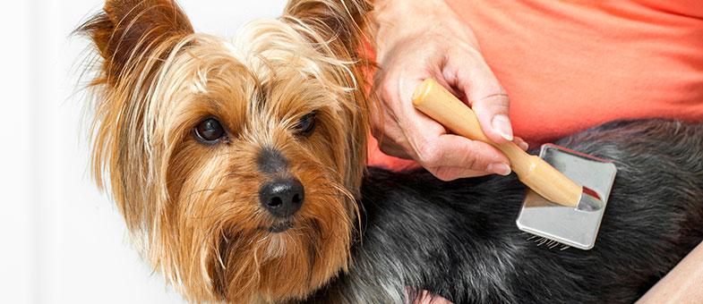 Fellpflege mit Nahrungsergänzungsmitteln für Hunde