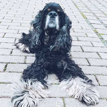 Blickkontakttraining mit Hund