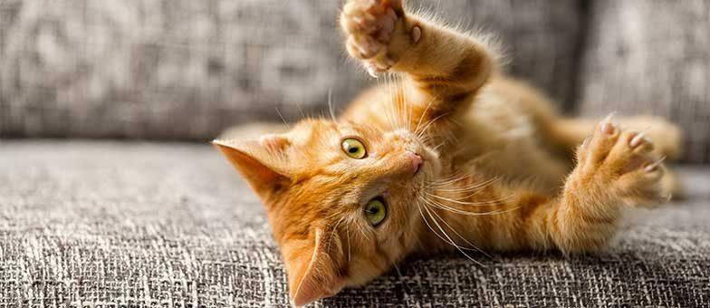 Sind Katzen kitzlig