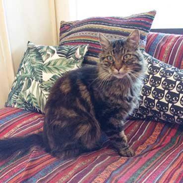 Warum miaut Katze?