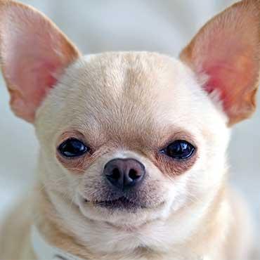 Hundeohren Richtig Pflegen Tipps Und Tricks Tierisch Wohnen