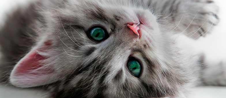 Wintermüdigkeit bei Katzen