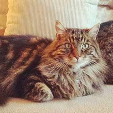 Katzen zusammenführen Tipps