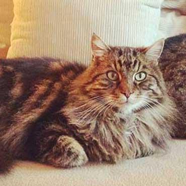die 5 phasen der katzenzusammenf hrung tierisch wohnen. Black Bedroom Furniture Sets. Home Design Ideas