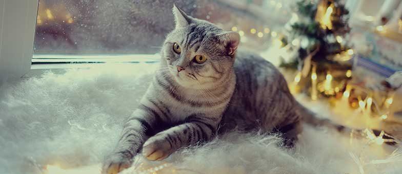 Was tun, wenn die Katze Angst vor Gewitter hat?