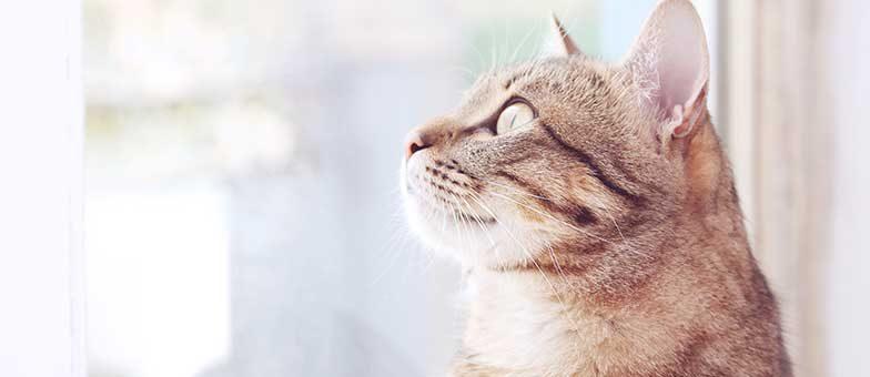 Bist du verrückt nach deiner Katze