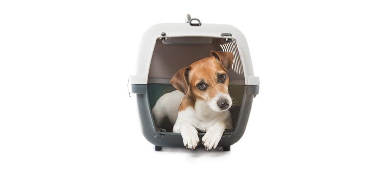 hundebox guide tipps zu material gr e und eingew hnung tierisch wohnen. Black Bedroom Furniture Sets. Home Design Ideas