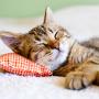 Katzenbaby an ein neues Zuhause gewöhnen