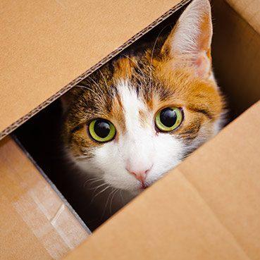 das-passende-katzenhaus