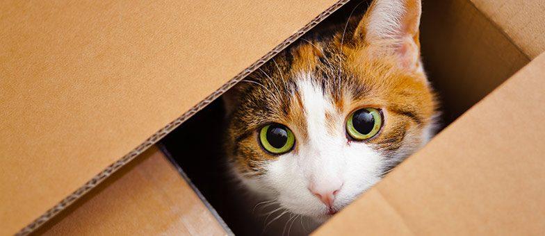 Katzenhaus oder Katzenkiste