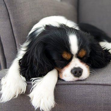 Pension für Hunde finden