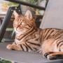 Katze sitzt auf dem Balkon