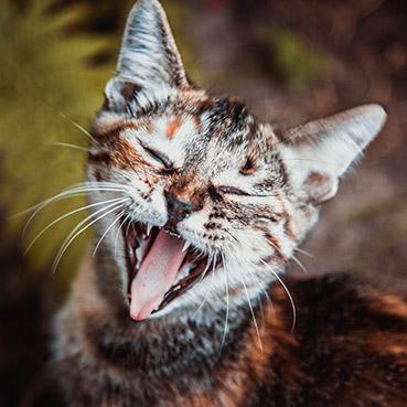 deutung-von-katzenverhalten