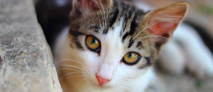 Deine Katze miaut ständig?