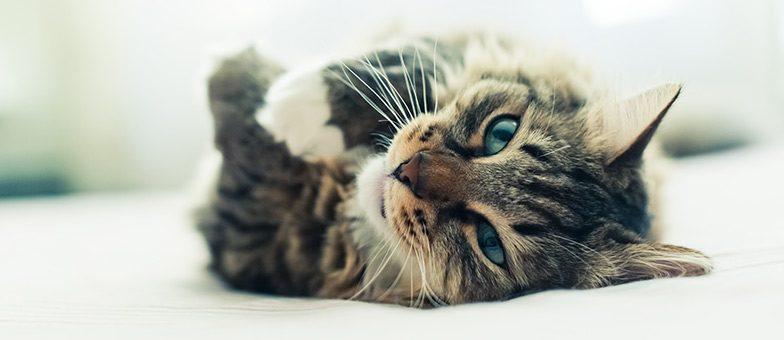 Was wollen Katzen uns sagen? Katzenverhalten richtig deuten.