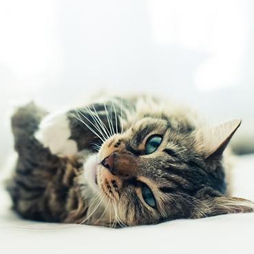 So deutet man Katzenverhalten