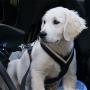 Kleiner Hund im Auto