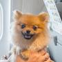 Hund im Flugzeug Handgepäck