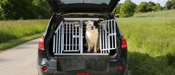 Hund im Kofferaum