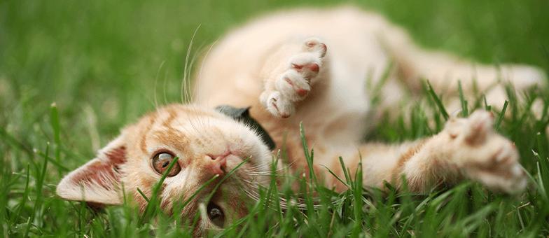 Katze liegt im Garten