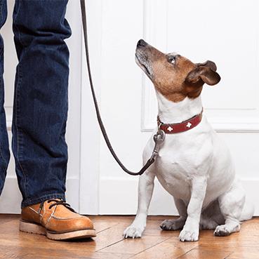 Wie oft Gassi gehen mit dem Hund