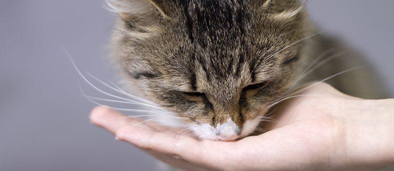 Sehr hübsche Katze frisst aus der Hand.