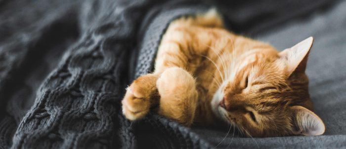 Die Katze schläft nur und frisst nicht mehr?