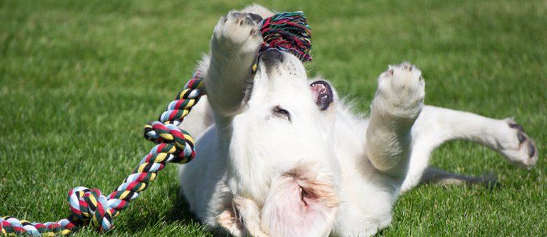 Hund mit Tau im Garten.