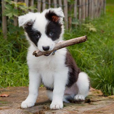 Hund im Garten glücklich
