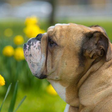 Tödliche Pflanzen für Hunde