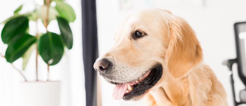 Giftige Zimmerpflanzen für Hunde