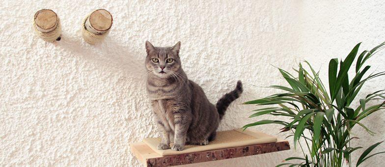 So baust du deine Katzenkletterwand