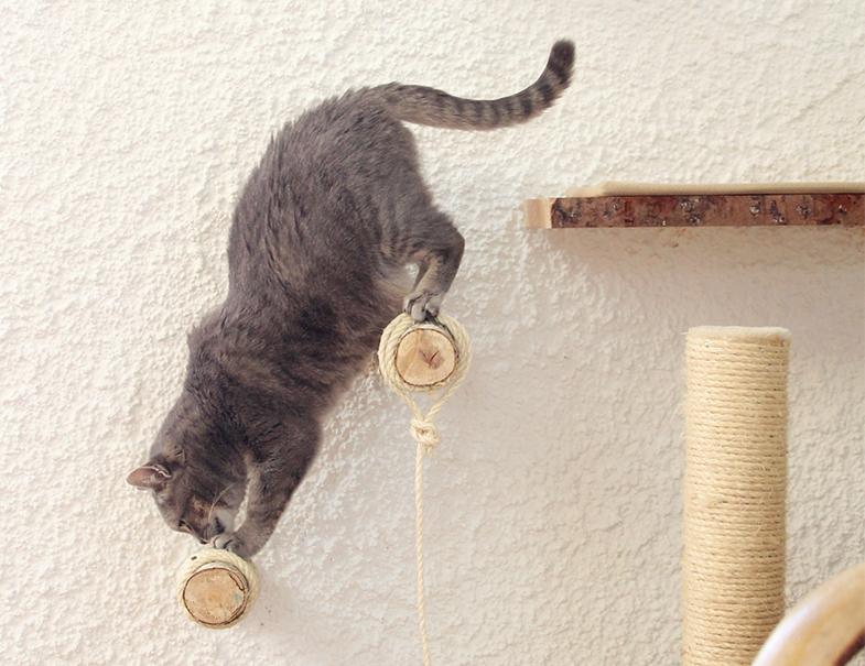 Katze klettert an Wand