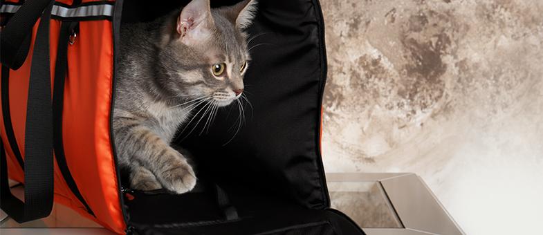 Katzen transportieren