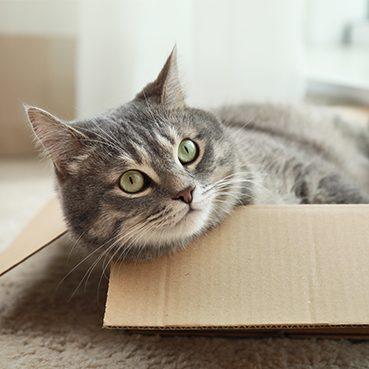 Katze Umzugskarton
