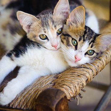 Katzen zusammenführen phne Trennung