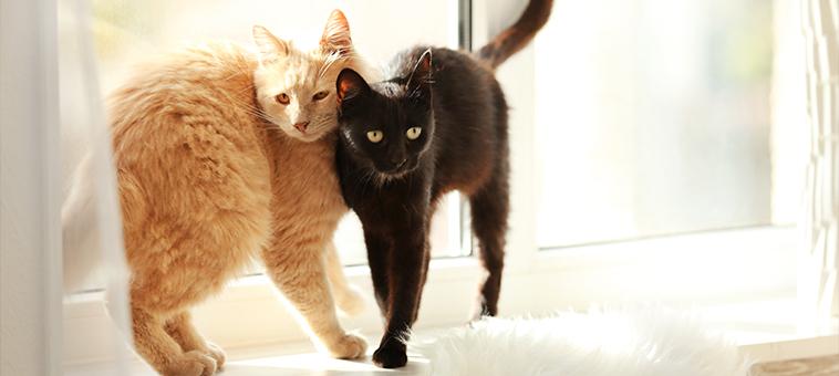 Katzen zusammenführen nach dem Umzug