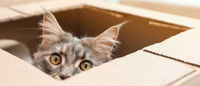 Katze im Umzugsstress