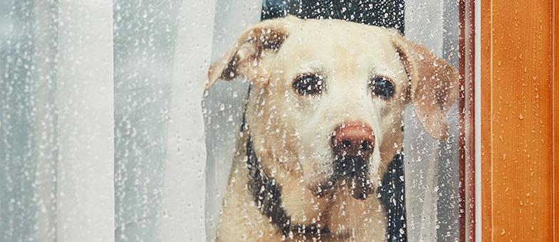 Dein Hund hat Angst vor Gewitter