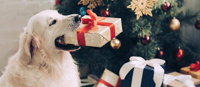 Hund Weihnachten Schokolade