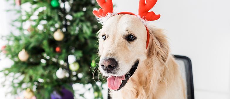 Hund Schokolade Weihnachten
